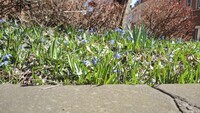 Frühlingsbild Aktion 1