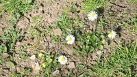 Frühlingsbild Aktion 2