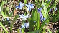 Frühlingsbild Aktion 3