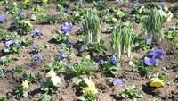 Frühlingsbild Aktion 4