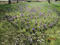 Frühlingsbild Aktion 7