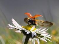 Frühlingsbild Andreas Giessler 3
