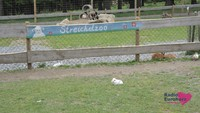 Wildpark33.JPG