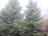 Weihnachtsbaum03.JPG