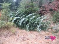 Weihnachtsbaum07.JPG