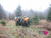 Weihnachtsbaum10.JPG