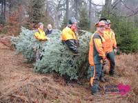 Weihnachtsbaum09.JPG