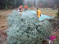 Weihnachtsbaum13.JPG