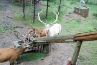 Wildpark 06.JPG